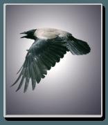 "Essays on ""The Raven"" by Edgar Allan Poe"