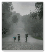 An Essay on a Rainy Season: Some Secrets of a Striking Paper
